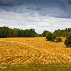 Dordogne in Yellow