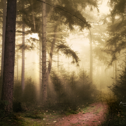 Mist Of Desire