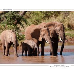 Elephants, Kenia