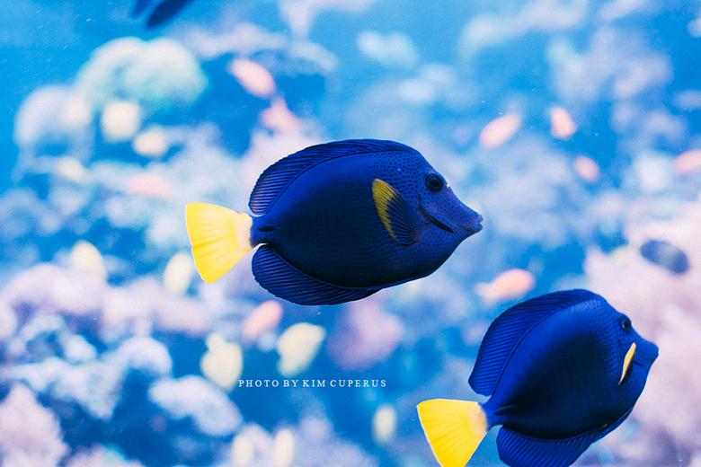 Aquarium Zoo Duisburg -