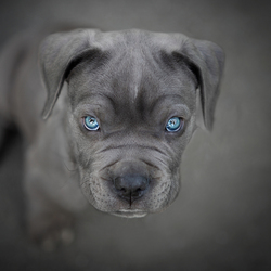 Mr Blue eyes....