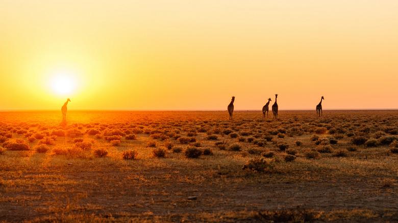 Etosha Sunrise - Zonsopkomst in Etosha National Park, Namibië.