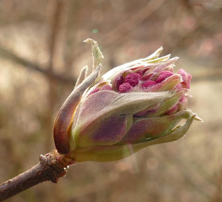 Lentebode - Vanmiddag ging ik op zoek naar de eerste tekenen van de lente en warempel.......