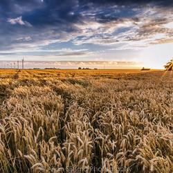 Contrasten tijdens zonsondergang over een graanveld
