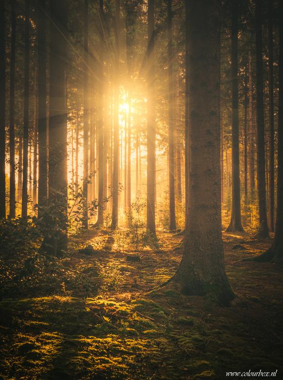 Vroege ochtend in het Vijlenerbos