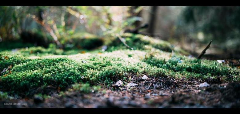 Mos - Mos in het bos.<br /> <br /> <br /> <br /> ©MotionMan 2020