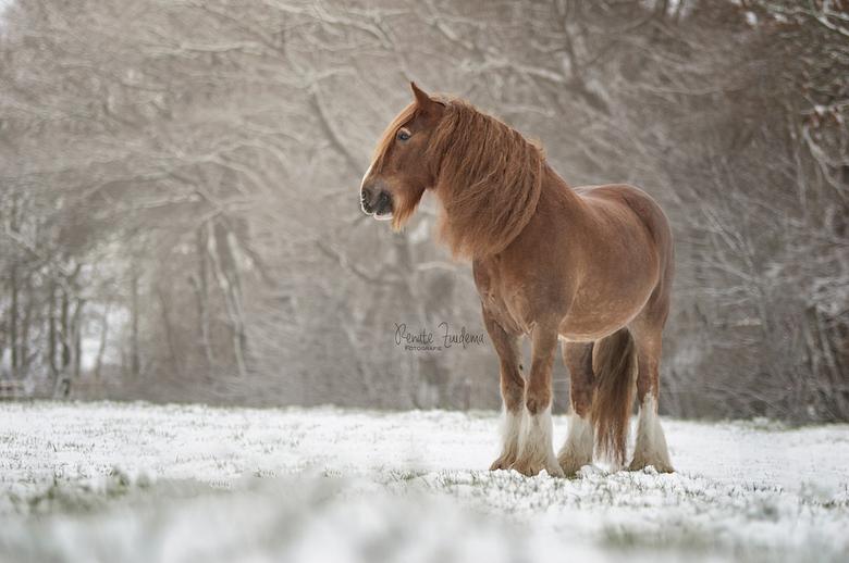 Chendo - Eindelijk wat sneeuw in Nederland!