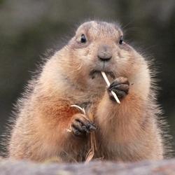 Gestopt met roken?