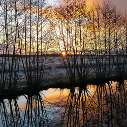 Zoom natuurfotografie-ochtend Easterskar (wintereditie)