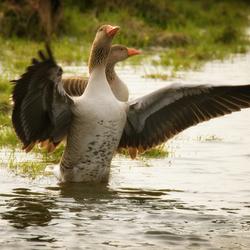 Dance of the lake