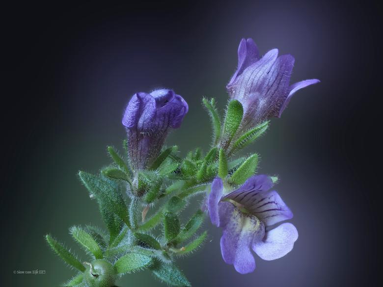 Tiny little flower in the garden - Klein bloempje in de tuin.