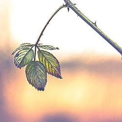 groen blaadjes