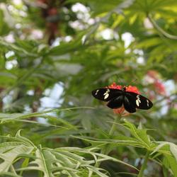Artis - Vlindertuin