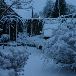 Winter in de (pr)achtertuin