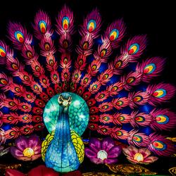 Pauw op het China Light Festival - Ouwehands Dierenpark