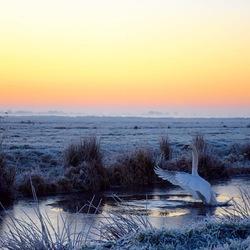 Winterwonderland - zwaan wat ben je mooi