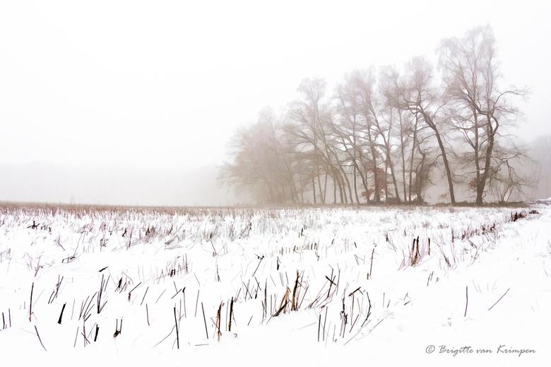 White World - Nog even wat sneeuw uit de koker voor het voorjaar wordt