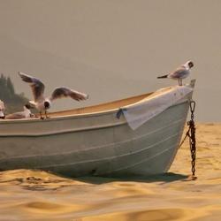 Meeuwen op boot te water