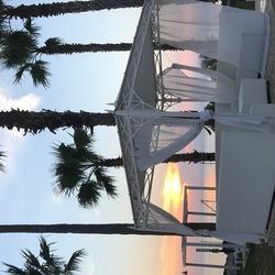 palms & view