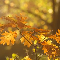 Autumn (de)Light