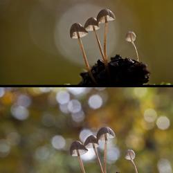 Bewerking: paddenstoelenzoomdag5 originelen
