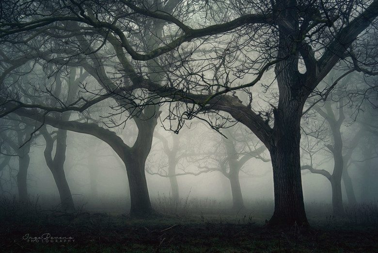 Haunted Orchard. -