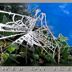 Ice on Web