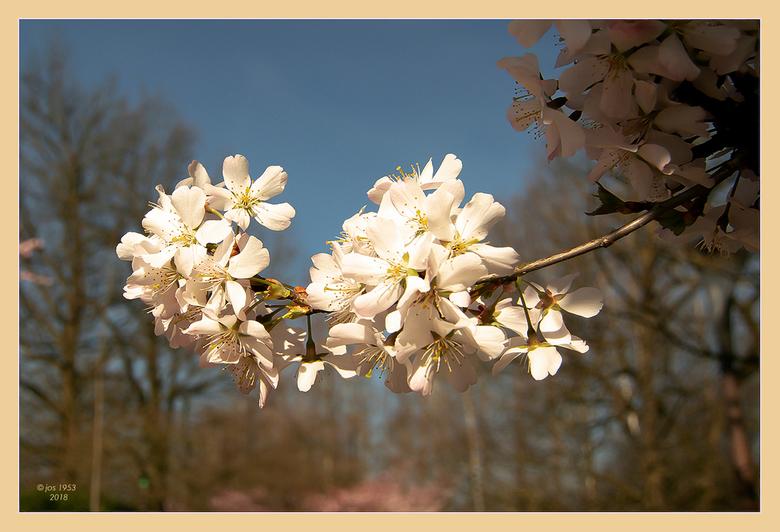 Lente in de Japanse tuin 2