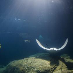 Ocean tunnel in Burgers Zoo