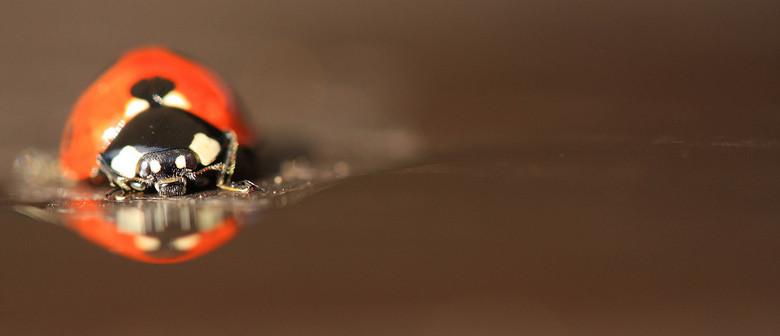 lieveheersbeestje - Dit lieveheersbeestje zat heerlijk bij een plasje met water op mijn buiten tafel. Ik gebruikte deze kans natuurlijk gelijk