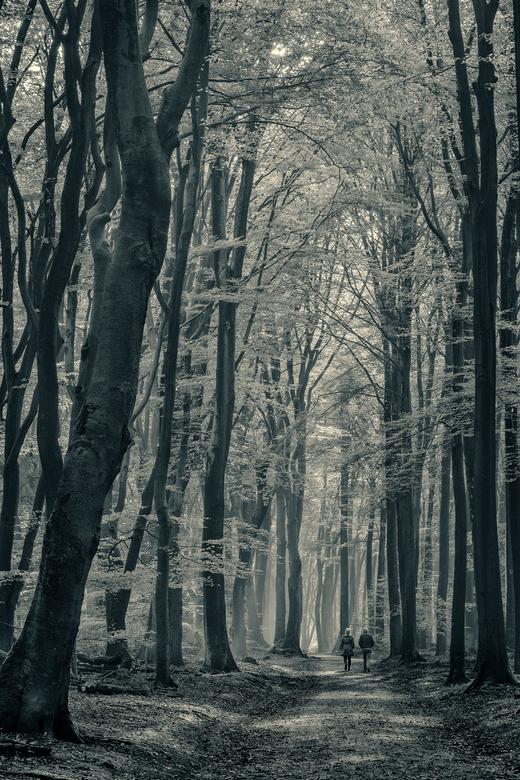 Voortdurend onderweg naar morgen ... - Het was een schitterende herfstdag in het Speuldersbos. Voor mij het mooiste bos van Nederland.