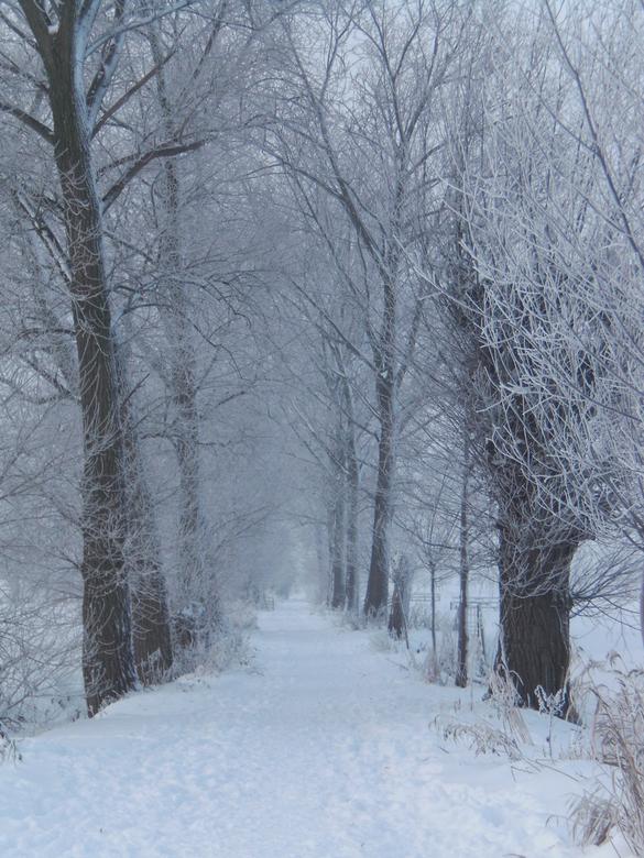 Winter landschap - Een winters landschap