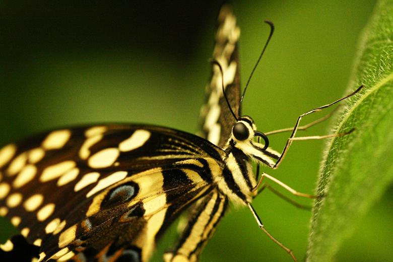 Butterfly 1 -