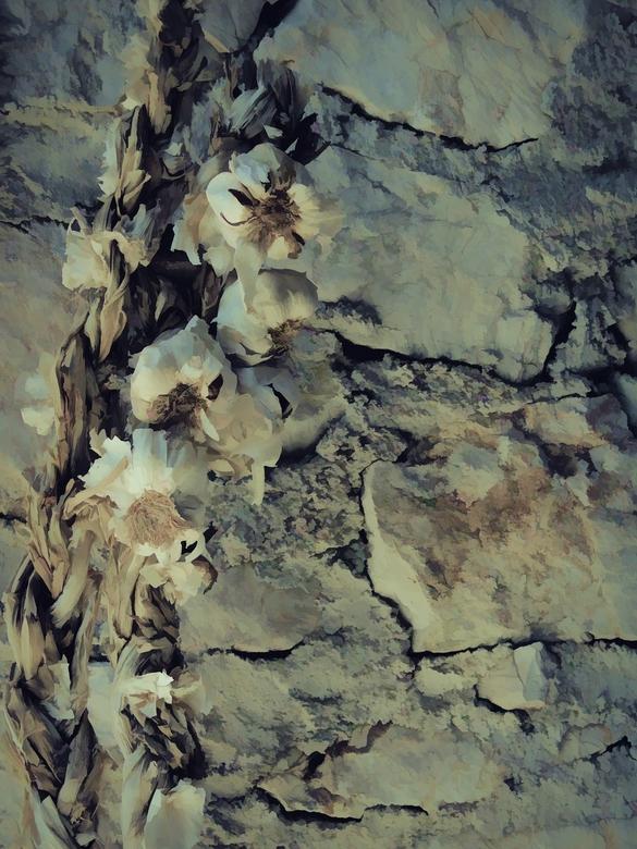 knoflook - als beeldend kunstenaar bewerk  ik mijn foto's om inspiratie voor schilderijen op te doen