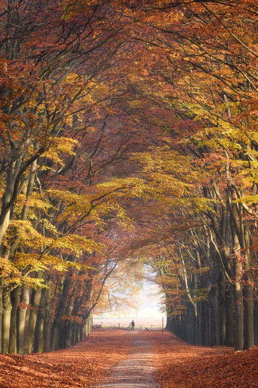 Autumn Walk - Schitterende omstandigheden in het bos afgelopen weekend. Prachtig licht, mooi landschap en goed gezelschap. Nu even nagenieten van de f