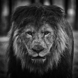 Koning van het dierenrijk
