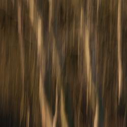 Bewogen bomen