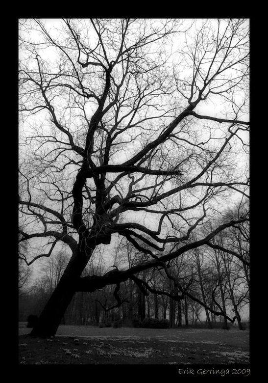 tree.. -