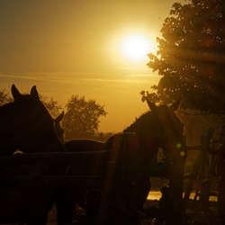Eigen paard is goud waard...