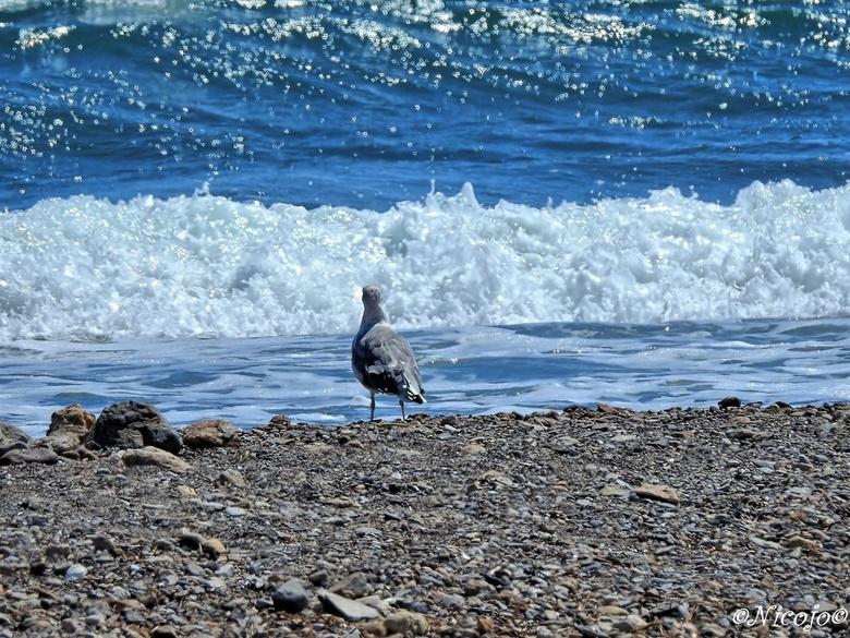 """Kijken naar de zee..... - Bedankt voor al jullie reacties op mijn vorige foto&#039;s, waarder ik zeer.<img  src=""""/images/smileys/smile.png""""/>"""
