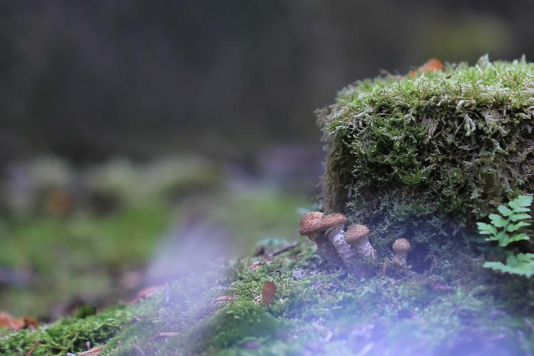 Hide - Er slopen een boel van die macrofielen in het bos bij Dorst op zoek naar o.a. paddenstoelen. Deze verstopten zich achter een boomstronk ... dac