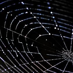 Web-art