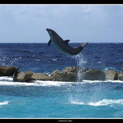 Flipper break free