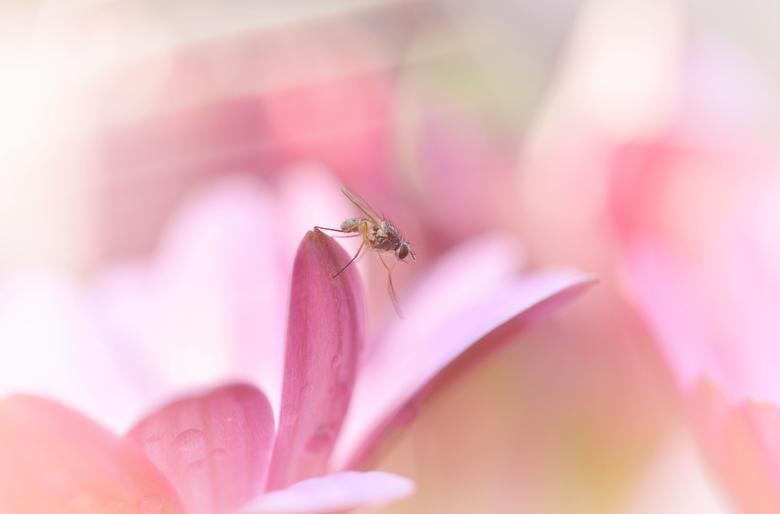 Sunshine cleaning - Vlieg op een roze/paarse margriet.