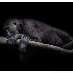 Where the monkey sleeps!