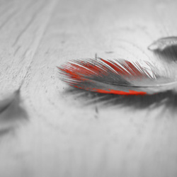 grijs en rood