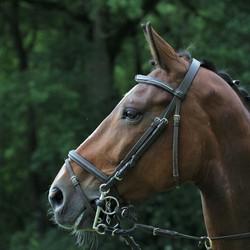 Tevreden paard (2)