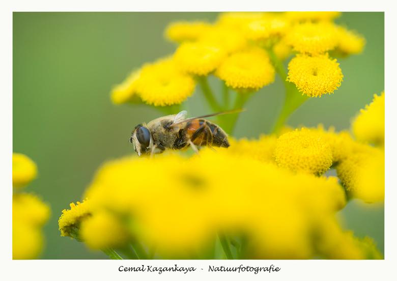 Bee - Bee..