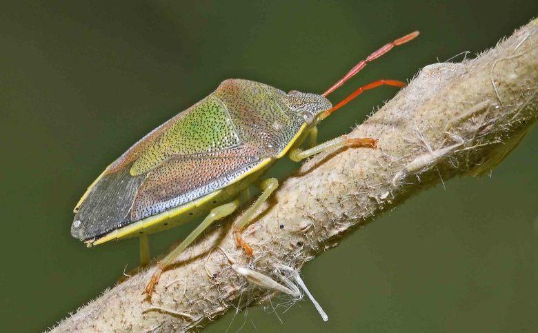 long met pootjes - Geleedpotigen (insecten, spinnen etc.) ademen niet door hun neus of mond. Ook is hun bloed niet in staat om zuurstof door het licha