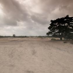 Zandverstuiving Zuiderheide